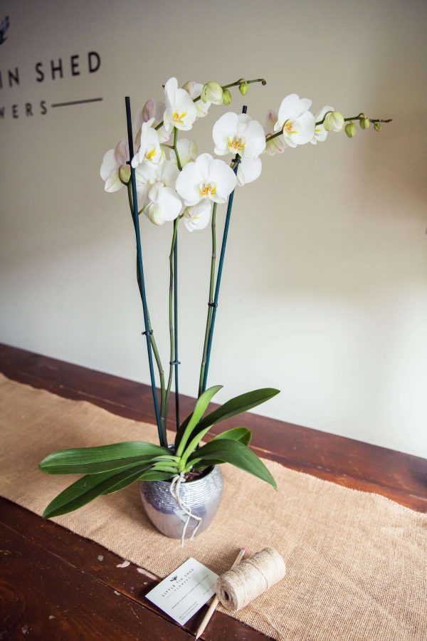 Orchid-plant-delivery